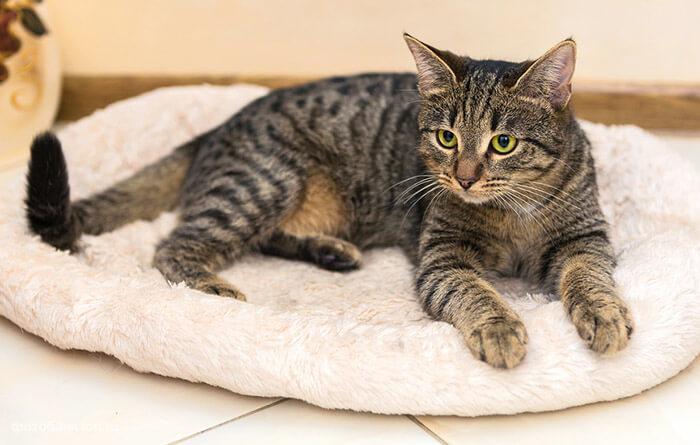 Как выбрать лежанки для кошек