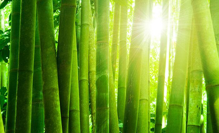 Бамбуковые пледы - уникальная новинка