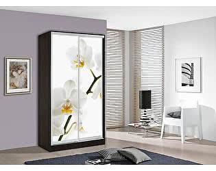 Шкаф-купе Мебель Маркет Оскар 1 Орхидея (Венге)