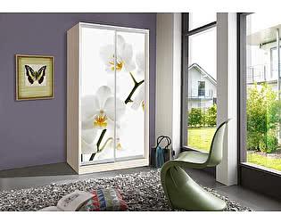 Купить шкаф Мебель Маркет Оскар 1 Орхидея (ДМ)