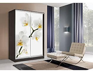 Купить шкаф Мебель Маркет Оскар 2 Орхидея (Венге)