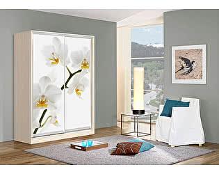 Купить шкаф Мебель Маркет Оскар 2 Орхидея (Дуб молочный)