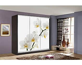 Купить шкаф Мебель Маркет Оскар 4 Орхидея (Венге)