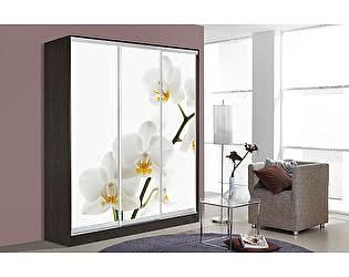 Купить шкаф Мебель Маркет Оскар 3 Орхидея (Венге)
