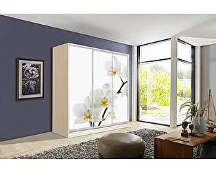 Купить шкаф Мебель Маркет Оскар 4 Орхидея (Дуб молочный)